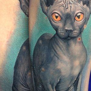 westend.tattoo_wien #cat #cattattoo #realistictattoo #realistic #sphynxcat #westend #westendtattoostudio #westendtattooandpiercing #wien #vienna