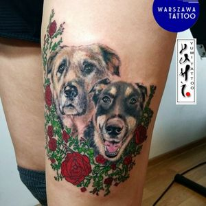 Dogs Leo & Mandryl