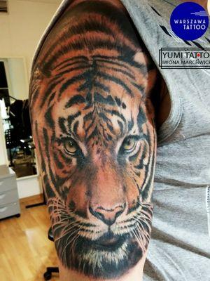 Tiger #tiger #tigertattoo #wildlife #wildcat #wild #wildnature #naturetattoo #nature #eyeofthetiger #realism #realistic #realistictatto #realistictattoos #colortattoo #colortattoos