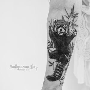 Ted panda
