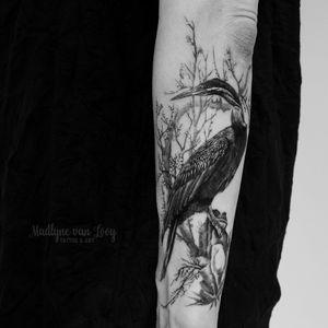 Darter/snakebird