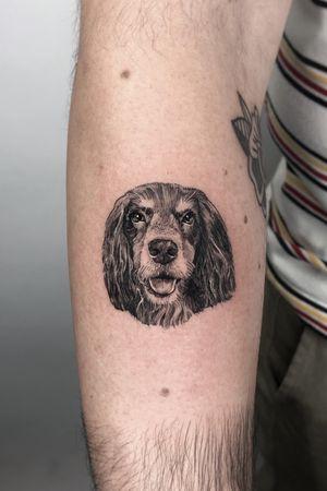 Micro pup portrait 🐶