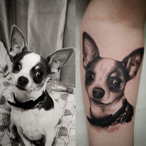 #tattoo #tattoos #tattooist #tattooartist #blackandgrey #blackandgreytattoo #realistictattoo #realismtattoo #portrait #chiahauha #dogportrait #dogtattoo #realistictattoo #realism #animal #animaltattoo #point2point #tattoostudio #erith #kent #southlondon
