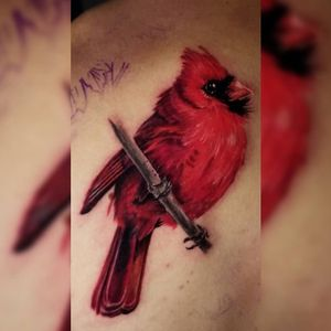 #color #bird #tattoo #colorworktattoo #colorrealism