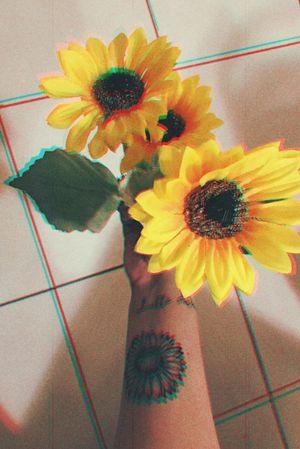 #sunflower #girasol