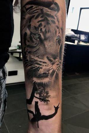 #tiger #blueeyes #dutch #animal