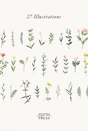 Delicate floral minimalist illustrations by Edith Press
