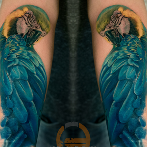 Part 1 of a full colour tropical animal sleeve. Sassy parrot.