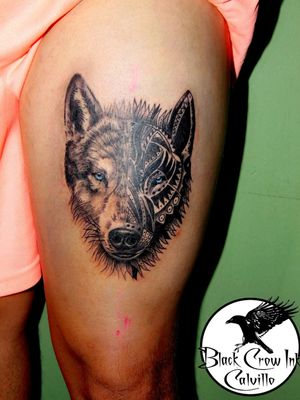 Lobo Wolf #lobo #wolf