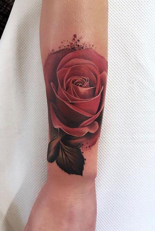 Roses by Freddie Albrighton