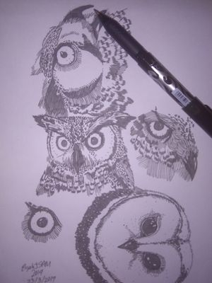 Owls (ignore the pen)