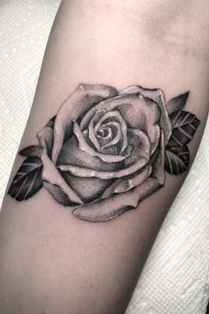 Fine line single needle tattoo. I love tattooing roses, if you want one shoot me a message. 🌹 #fineline #singleneedle #singleneedletattoo #dotwork #stippletattoo #singleneedlework #finelinework #singleneedletattoos #rosetattoo #roses