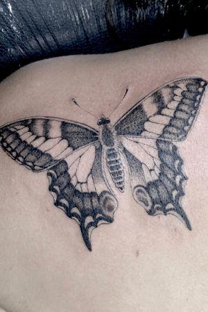 Fine line single needle #butterfly tattoo. #fineline #singleneedle #singleneedletattoo #dotwork #stippletattoo #singleneedlework #finelinework #singleneedletattoos #butterflytattoo