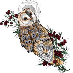 Barn owl available #procreate #flash #tattooflash #illustration #berlintattoo #berlinink #berlin #neotraditionaltattoos #neotraditional #available #newtraditional #colortattoo