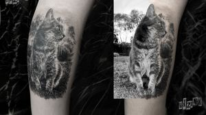 Portrait of Luna the fluffy cat!