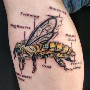 Anatomy of a honeybee by Adam McDade #honeybee #beetattoo #adammcdade