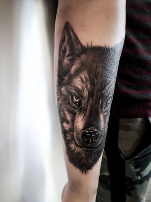 Wolves have always been a popular tattoo 🐺👍🏻 #wolftattoo #wolf #blackandgreytattoo #forearmtattoo #tattooideas