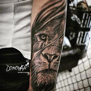 Un viejo León muy guerrero y con cicatrices 🦁👊 #DonovanTattoos #tattooleon #tatuajeleon #tattoo #tattoart #tatuajestunja #tattooed #tattooink #tattooist #art #realistictattoo #sombrastattoo