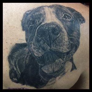 #dogportrait