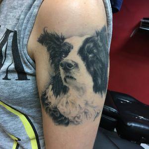 Healed doggo