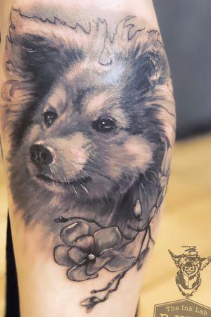 realistic black grey dog portrait