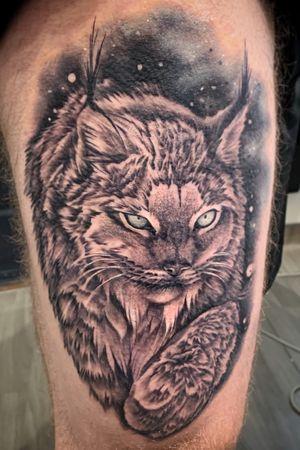 🖤Canadian lynx!
