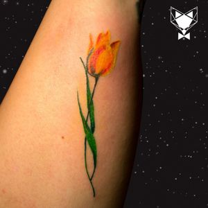 Miniature colored tulip
