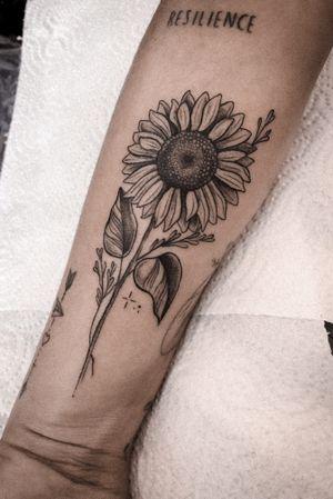 Sunflower 🌻