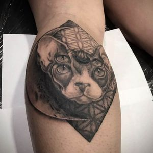 I love these 4 eyed sphinx cats! 🐱 If would like something like this (doesn't have to be a sphinx 😂😂) send me your ideas #realistictattoo #tattoo #ink #inked #tattoos #blackandgreytattoo #art #blackandgrey #tattooartist #tattooed #realism #tattooart #realistic #tattoolife #realismtattoo #inkedup #irishinkers #tattooing #tattoooftheday #catportrait #portraittattoo #tattoostudio #skinartmag #sullen #bishoptotary #sphynxcat #irishtattoonation