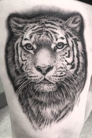 #tiger #tattoo #animal #blackwork