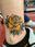 Jeremy Allan Tattoo