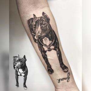 #dog #portrait #realism #blackandgrey