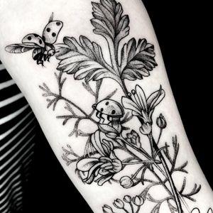 Lovely ladybugs #dotwork #etching #illustrative #linework #fineline #delicate #flower #floral #animal #nature #botanical #surrealism #trashpolka #realistic #blackwork #blackandgray #girlytattoo #idea #design #drawing #sketch http://www.therubygore.com