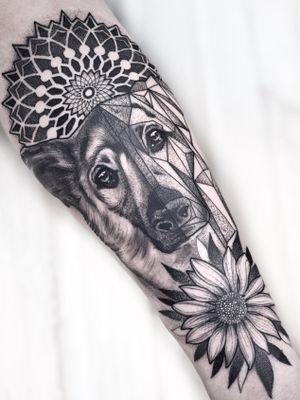 Dog geometric