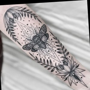 Cicada geometric