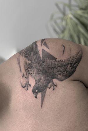Hawk. #mexico #nyc #toronto