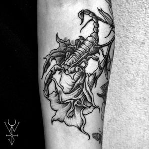 Datura Scorpio 🗡 ➕➕➕➕➕➕➕➕➕➕➕➕➕➕➕➕➕➕➕➕➕➕➕➕➕➕➕➕➕➕➕➕➕➕➕➕➕➕➕➕➕➕➕➕➕➕➕➕➕➕➕ #botancialtattoo #blackwork #flowertattoo #tattoo #botanical #illustration #linework #tattoos #dotwork #blxckink #blacktattooart #tattoodo #btattooing #brooklyn #williamsburg #darkartists #iblackwork #blackclaw #dankubin #art #tttism #inked #NYC