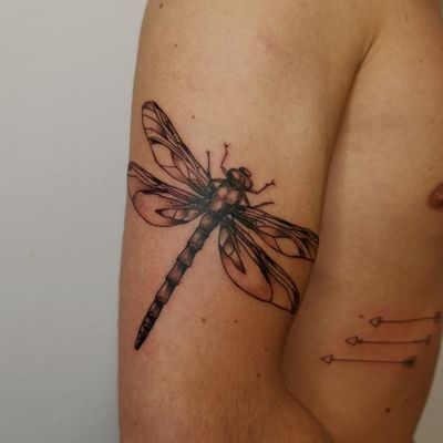 Dragonfly and arrows #dragonfly #peppershading