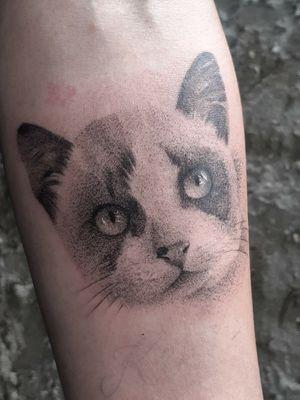 #cat #catlovers #realismo #blackwork #blackandgreytattoo