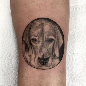 Beagle #tattoo #beagle #beagletattoo #tattoodog #dogtattoo #dog #tattoodo #tattoodobr