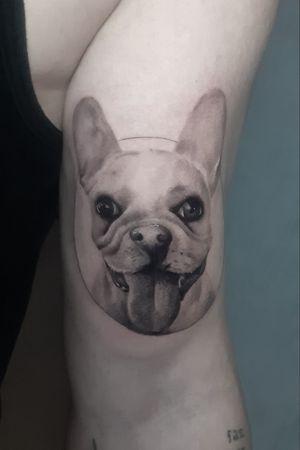 #pet #petlovers #dog #bulldogfrances #bulldog