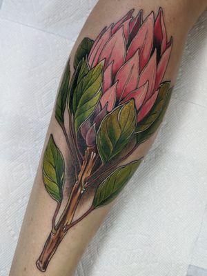 Protea flower . . . . . #montrealtattoo #mtltattoo #montrealtattooartist #mtltattooartist #tattooed #tattoomontreal #tatouagemontreal #montrealtattoostudio #montrealtattooartists #montrealtattooshops #neotrad #neotraditional #neotraditionaltattoo #neotraditionalflash #neotradsp #neotradtats #txttoo_canada #txttoo #tattstock #neotraditionalworld #neotraditional_world #tattstock #newschooltattoo #neotradinspiration #Privatestudio