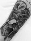 Birds, Owl and eagle
