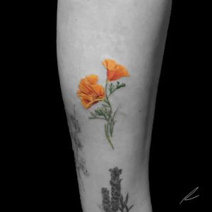 Instagram: @rusty_hst Micro color poppies. #flower #floral #poppy #poppies