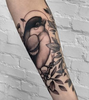 ✨🕊 #bullfinch #bird #nature