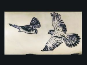 Flying falcons