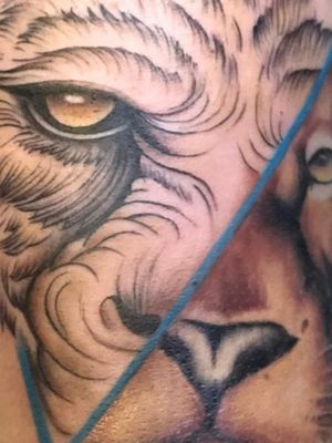 Lion eye detail Artist : Çağdaş Mutlu