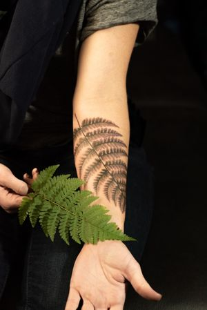 Spreading wood fern bring-a-plant • Color shaded • 4 hours total #ferntattoo #botanicaltattoo