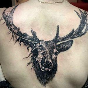 #deer #deerskull