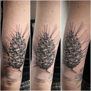#tattoo #tatouage #pinecone #pineconetattoo #pive #pivetattoo #pommedepin #pommedepintattoo #lausanne #tattoolausanne #lausannetattoo #dot #dotwork #dotworktattoo #dotworkers #stippling #stipple #stippletattoo #fann_ink